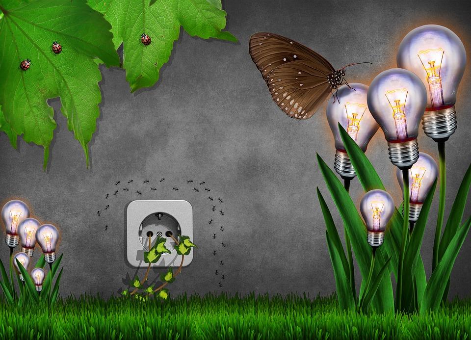 spina elettrica, giardino, fiori lampadine